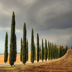 San Quirico Val d'Orcia, Province of Siena, Tuscany region Italy