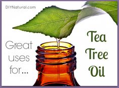 There are many great uses for tea tree oil and we use it ALL THE TIME. Here are 12 simple ways to start using it for natural cleaning, beauty, and general health!