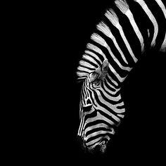 .      Delights of The Garden*.* stripes.  NubianBrothaz onyahooandtumblrandblogger
