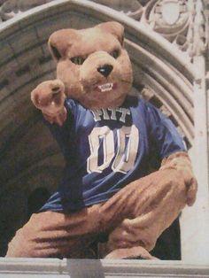 Pitt Panther!                                                                                                                                                                                 More