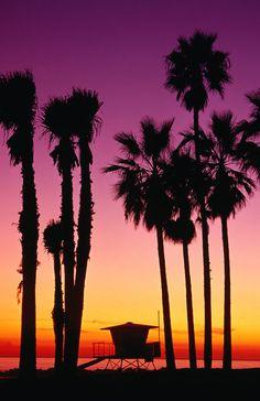 """Ponderation — lifeisverybeautiful: via """"Palm trees at sunset,..."""