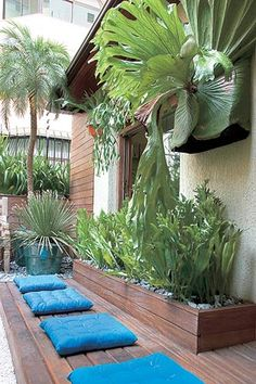 Love the large patio planter+ staghorn fern above House Plants Decor, Plant Decor, Air Plants, Indoor Plants, Outdoor Rooms, Outdoor Gardens, Garden Design Magazine, Staghorn Fern, Deco Floral