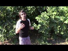 La magia de la higuera - brujo verde - makapeta - 2014 - YouTube