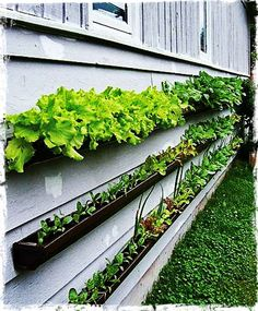 Come crescere le verdure in vaso Orto in terrazza urban veggie garden DIY Insalata in vaso Salad on vase Gutter garden -an idea for herbs or salad/vegetable garden on gutters lined together! Decorates your outside wall too! Dream Garden, Home And Garden, Smart Garden, Easy Garden, Garden Ideas For Side Of House, Vege Garden Ideas, Very Small Garden Ideas, Upcycled Garden, Family Garden