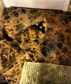 Pets Camouflaged Among Everyday Items... Calico Cat on Imported Marble       Home Decorating 101: Pick floor tiles that match the housecat. Exactly.