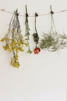 Inspired living, interiors, wanderlust and road trips. Hanging and drying flowers, bringing nature into the home