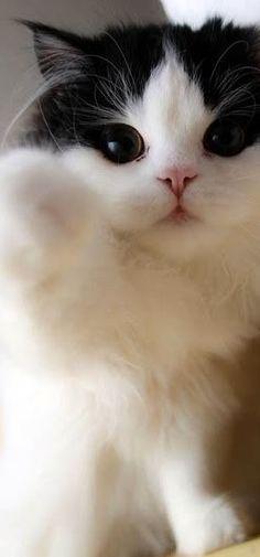 Cute Pet Pictures, Pics: Kittens, Cat, Cats, Piglets, Dogs, Puppies, Pets & Animals, Katze, Katzen, süß, klein, große Liebe, Katzenkind, Katzenkinder, schwarze Katze, schnuckelig, zuckersüß, große Augen, 고양이