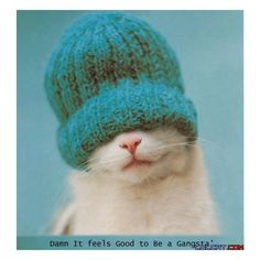 Beanie Wearing Gangster Kitten - Funny LOLCAT Picture ❤ liked on Polyvore featuring backgrounds