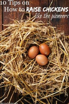 Want fresh eggs daily from your own backyard? Awesome tips on how to raise chickens the old-fashioned way, like the pioneers did. Love the tips on which breeds to get for cold climates, how to keep them warm without lights, and the hatching out tips! I'm so excited to enlarge our flock now!: