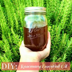DIY | Rosemary Essential Oil | Going to try this method with all the overgrown basil I have.