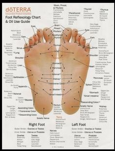 Foot Reflexology Chart & Oil Uses specific to DoTerra Doterra Essential Oils, Young Living Essential Oils, Essential Oil Blends, Essential Oil On Feet, Pure Essential, Plant Therapy Essential Oils, Foot Chart, Mudras, Modern Essentials