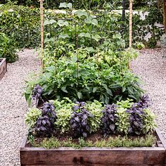Smart trellising. A simple trellis of wire mesh and bamboo stakes provides support for pole beans in a 4-by-8 foot raised bed. Adding a vertical structure expands the available planting area and doubles as an attractive architectural element in the garden.