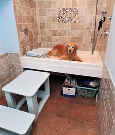 25 brilliant lifehacks that every dog owner should know pinterest laundry room example of dog wash will want raised like this with stairs stored solutioingenieria Gallery