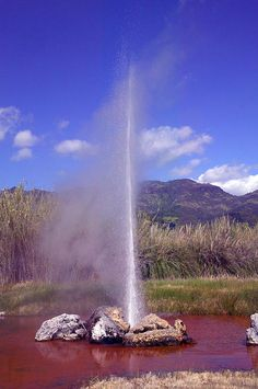Old Faithful Geyser in Calistoga - Napa Valley
