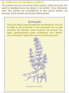 "ebook created by Audrey Keszek ""Plantes aromatiques en 10 Leçons"" - Laurent Bourgeois - Éditions Rustica #epub #livrenumérique #ebook"