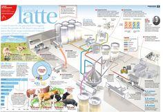 La strada del latte — Ci sono le mucche che pascolano. Poi vengono munte. Fin qui tutto ok. Ma dopo? Cosa succede prima che il latte venga confezionato? O diventi un panetto di burro? — Scaricalo in formato PDF o JPG! — Scopri gli altri infografici su www.cooperazione.ch/poster — Pubblicato il 3 aprile 2012 — Infografici, Ticino, Latte, Produzione, Lati, Cooperazione, Jona Pixel Mantovan