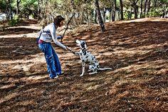 Nell'immaginario collettivo, Fido che dà la zampa, è uno dei comportamenti caratteristici dei nostri amati cani. Ma, come insegnare al cane a dare la zampa?