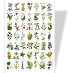 Ballymaloe Cookery School Shop - Wild Flowers Poster