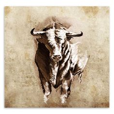 Vintage Retro Animals Sketch Bull Modern Canvans A4 Large Art Print Poster Wall Picture Living Room Home Decor Painting No Frame