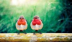Birds 🐦