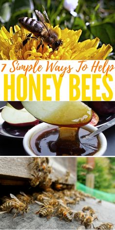 7 Simple Ways To Help Honey Bees — I have been thinking about our poor bees for a while and I went hunting the internet to see if I could do anything to help and guess what! I did. This article have 7 great ways we can help the bees right at home and all are so simple we all should make a conscious effort to help them.