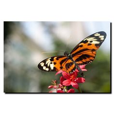 Tropical Butterfly by Cary Hahn Photographic Print on Canvas