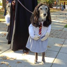 Pets in Funny Costumes