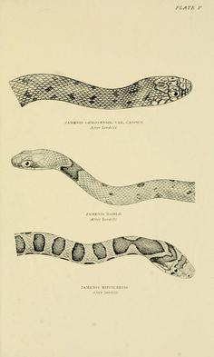 The snakes of Europe / - Biodiversity Heritage Library