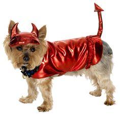 Disfraces de Halloween para perros   Decoración de Uñas - Manicura y NailArt