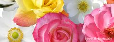 Beautiful Flowers..... #flower #coverphoto
