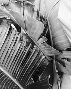 tropical plants + nature + garden + black and white Beach Aesthetic, Aesthetic Colors, Cowboy Theme, Slow Living, Black N White, Dream Big, Foto E Video, Instagram Feed, Monochrome