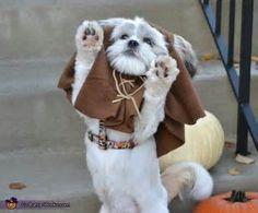 Ewok lhasa apso... just CUTE! :)--everyone always tells me Diva looks like an Ewok!