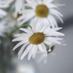 Still picking flowers in October | ❁ |