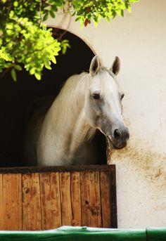 Le cheval blanc by EleaLaFleur.deviantart.com on @deviantART