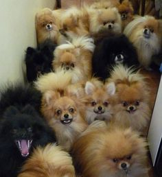 I do not advocate hoarding of any kind, but when the pups are this cute, I do see how one can give in...