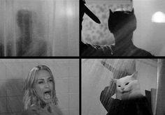 Silly Jokes, Funny Jokes, Hilarious, Silly Cats, Funny Images, Funny Pictures, Super Pictures, Funny Horror, Creepy Horror