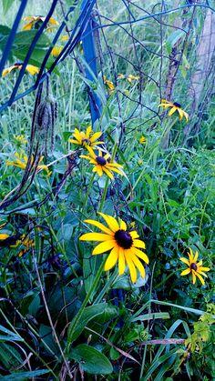 Anru Tian Photography - Yellow fleurs