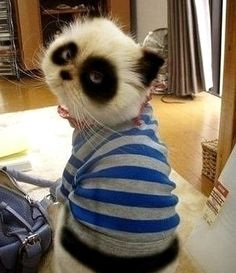 Emo Panda Cat--How miserable does this lil guy look :(