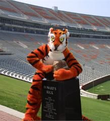 Clemson Tiger and Howard's Rock at Death Valley.just voted College Football Stadium! Clemson Tigers, Clemson Football, College Football Teams, Football Stadiums, Clemson Athletics, Football Pics, Football Quotes, Auburn Tigers