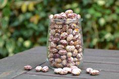 Our bean bounty