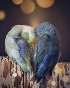 Funny Parrots, Cut Animals, Animals Photos, Dove Bird, Crochet Birds, World Photo, Little Birds, Disney Wallpaper, Galaxy Wallpaper