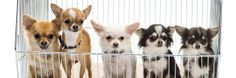 5 Ways You Didn't Realize You're Making Your Pet Hate You | Cracked.com