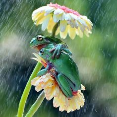 27 superb images from the National Geographic Traveler Photo Contest Frog BFF's huddle under their daisy umbrella! Animals And Pets, Baby Animals, Funny Animals, Cute Animals, Spring Animals, Beautiful Creatures, Animals Beautiful, Beautiful Cats, Tier Fotos