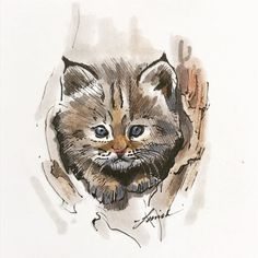 Number 13, Cat Drawing, Lynx, Sim, Sketches, Drawings, Illustration, Painting, Animals