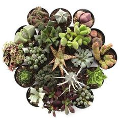 Clay and Leaf succulent store❤️ 'Weirdo™' Pack All Plants, Indoor Plants, Zebra Plant, Succulent Soil, Succulent Arrangements, Bonsai Styles, String Of Pearls, Echeveria, Houseplants