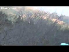 Angel Footage - YouTube