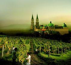 Klosterneuburg Monastery - Winery, Lower Austria