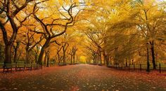 Autunno in Central Park a New York City