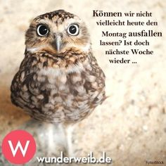 Beautiful Owl, Animals Beautiful, Cute Funny Animals, Cute Baby Animals, Owl Photos, Days Like This, Cute Owl, Animals Of The World, True Words