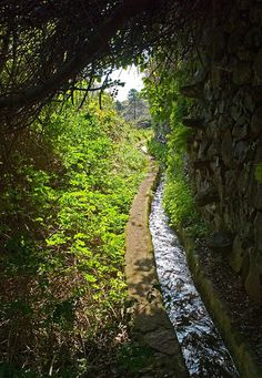 Madeira.Walk and live in nature.Follow the levadas or www.madeirapropertyguide.com